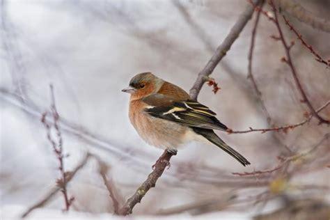 putni Latvijā