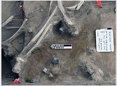 Coyote Canyon Mammoth Site Kennewick, WA