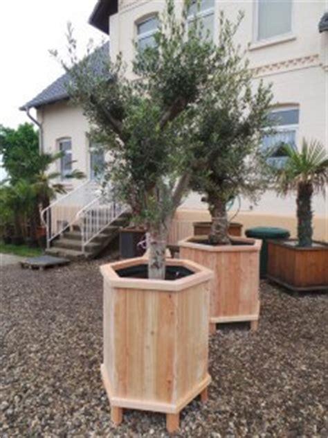 Sehr Große Beheizte Pflanzkübel Für Palmen, Olivenbäume