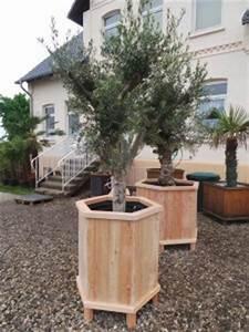 Große Pflanzkübel Für Draußen : sehr gro e beheizte pflanzk bel f r palmen olivenb ume ~ Sanjose-hotels-ca.com Haus und Dekorationen