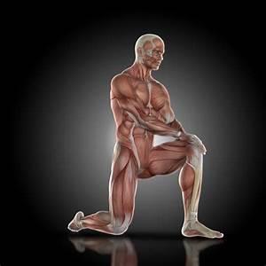 Image Homme Musclé : homme muscl avec un genou terre t l charger des photos gratuitement ~ Medecine-chirurgie-esthetiques.com Avis de Voitures