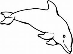 dolphin Colouring Page...
