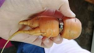 alberta woman finds lost ring on carrot in garden cp24com With carrot wedding ring