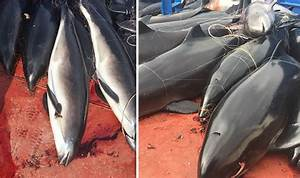 50 dolphins deliberately and illegally killed for 'Chinese ...
