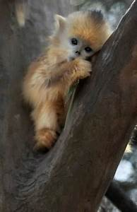 collections monkeys pics images and wallpapers