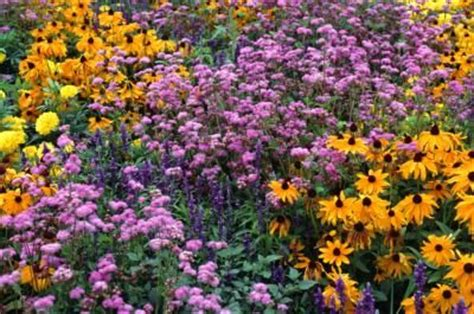 how to arrange a flower bed how to arrange a perennial flower bed