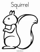 Squirrel Coloring Squirrels Template Built California Usa Twistynoodle sketch template
