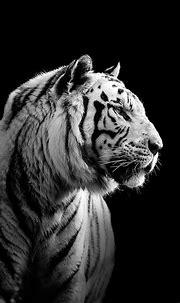 iPhone, Siberian Tiger, Black - Wallpaper | Tiger images ...