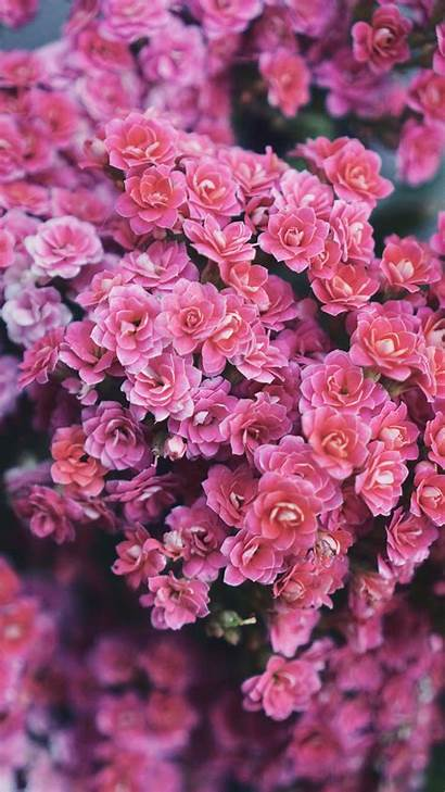 Iphone Flowers Wallpapers Xs Flower Nature Pink
