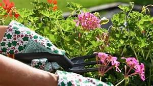 Wann Balkon Bepflanzen : ber ideen zu balkonk sten bepflanzen auf pinterest pflanzenk bel balkonk sten und ~ Frokenaadalensverden.com Haus und Dekorationen