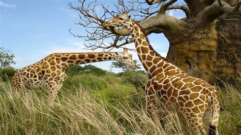 Wildlife Desktop Wallpaper (62+ Images