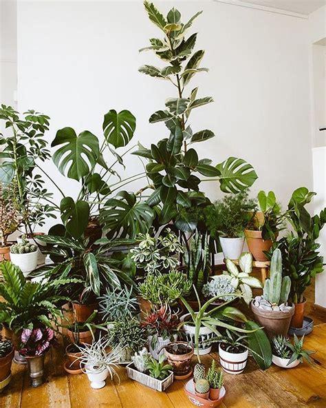 Pflanzen Für Innen by Plant Collection Jungle Plants