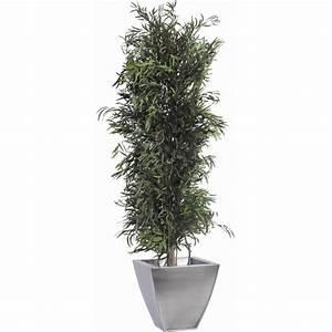 Eucalyptus Plante D Intérieur : eucalyptus nicoly stabilis vert grossiste en plantes stabilis es et ~ Melissatoandfro.com Idées de Décoration