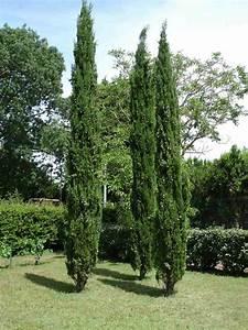 Arbre Croissance Rapide : arbres croissance rapide pour les jardiniers impatients ~ Premium-room.com Idées de Décoration
