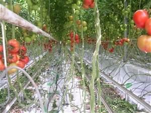 Comment Tuteurer Les Tomates : piquet de tomate tuteur tomates 1 50 cm en bois jardin et ~ Melissatoandfro.com Idées de Décoration