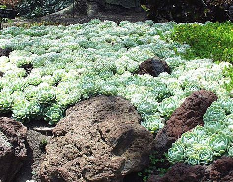 plants suitable for shade 39 best plants for dry shade images on pinterest succulents succulent plants and succulents