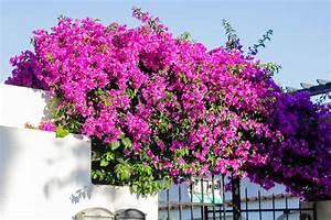 Mediterrane Pflanzen Liste : tipps garten und pflanzen ambiente mediterran ~ Watch28wear.com Haus und Dekorationen
