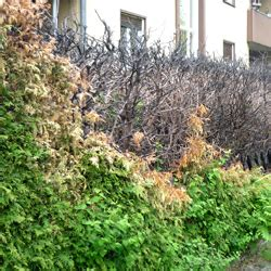 Tarif Garten Und Landschaftsbau Mecklenburg Vorpommern by Gutachter F 252 R Gartenbau In Mecklenburg Vorpommern Ihr