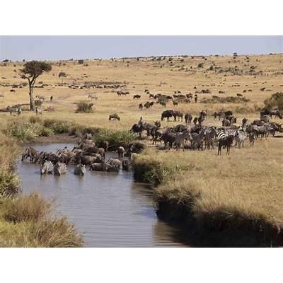 Great Wildebeest Migration & Uganda Gorilla TrekZicasso