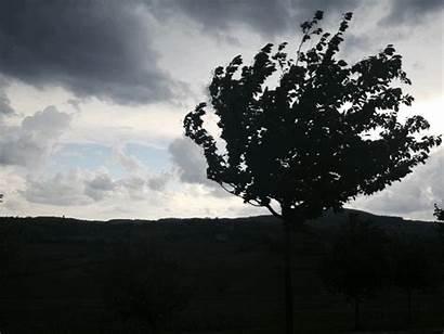 Windy Tree Late Afternoon Quite Afkomstig Van