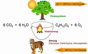 Umsatz Berechnen Chemie : vernetztes studium chemie chemie f r mediziner beispiel ~ Themetempest.com Abrechnung