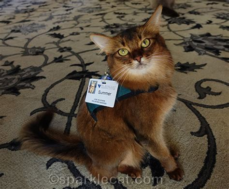 therapy cats therapy cat harness selfies