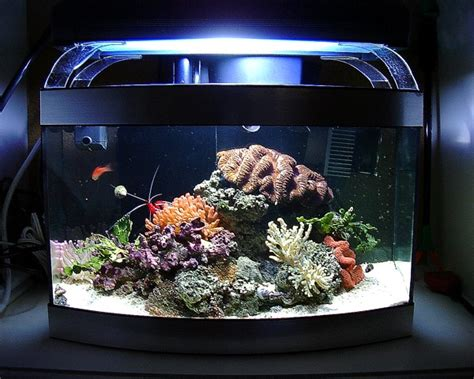 best fish nano tank remove the tomini tang from this nano tank and you would a 2017