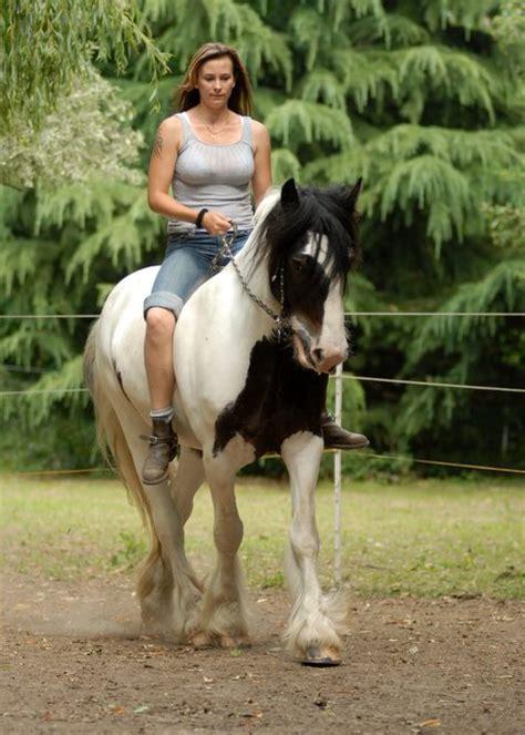 reiten ohne sattel pferdebilder galerie im reitforum