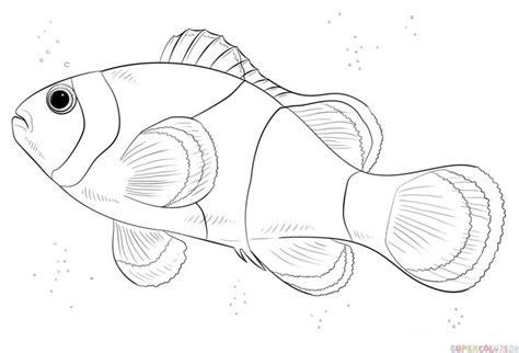 draw  clown fish step  step drawing tutorials