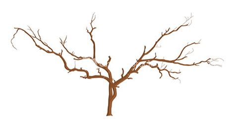 tree branch designs dead tree branches stock image