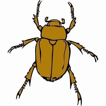 Bug Beetle Clip Svg Clipart Px Icon