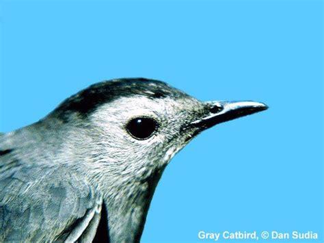florida bird sounds ornithology
