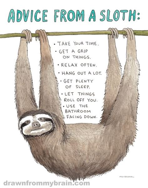 Cute Sloth Meme - http www drawnfrommybrain com wp content uploads 2014 01 advice from a sloth png sloths