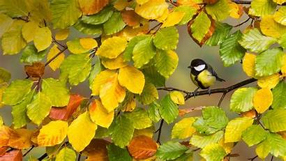 Fall Birds Animals Trees Yellow Animal Tree