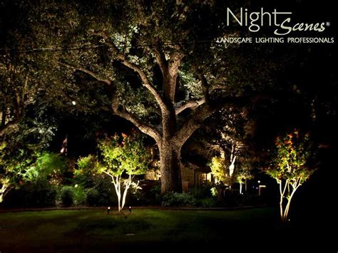 oak tree lighting oak tree lighting in and central nightscenes landscape lighting