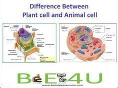 plant cell  animal cell
