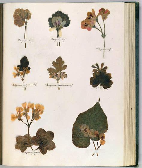botanical drawing technique composition  emily