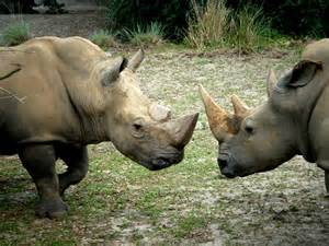 Most Endangered African Animals