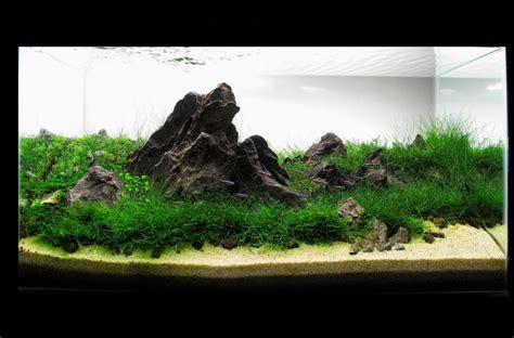 Aquascape Design Software - aquascape gallery quot my my story quot