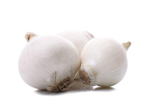 oignon blanc cuisine oignon blanc la vie grande épicerie et fraiche