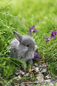 Cute Bunnies in Grass