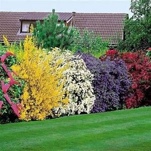 4 Jahreszeiten Hecke : siepe fiorita siepi come coltivare una siepe fiorita ~ Lizthompson.info Haus und Dekorationen