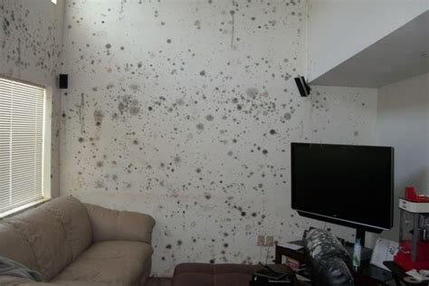 tone deaf army video urges mold prevention  wake