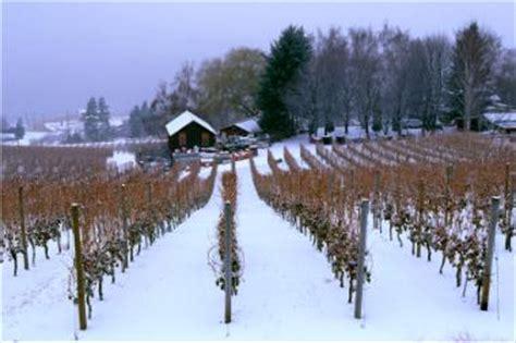 canadian ice wine okanagan wineries  ice wine  canada
