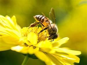 Welche Blumen Für Bienen : blumen am m nchner rathaus werden bienenfreundlich das offizielle stadtportal ~ Eleganceandgraceweddings.com Haus und Dekorationen