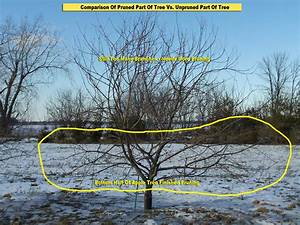 Weather Garden Tip  Still Time To Prune Fruit Trees  And