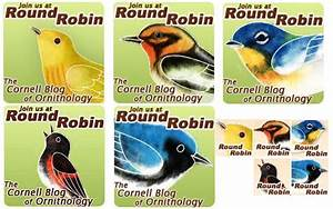 Warblers for Your Website: Introducing Our New Round Robin ...