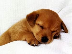 Free Hd Puppy Wallpaper | Free Download Wallpaper ...