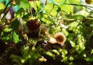 Was Fressen Schnecken : gem se kr uter blumen die schnecken lieben gerne fressen ~ Orissabook.com Haus und Dekorationen