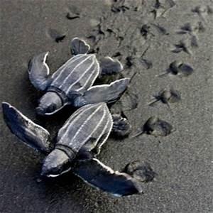This Caribbean Hotel Guarantees a Sea Turtle Encounter